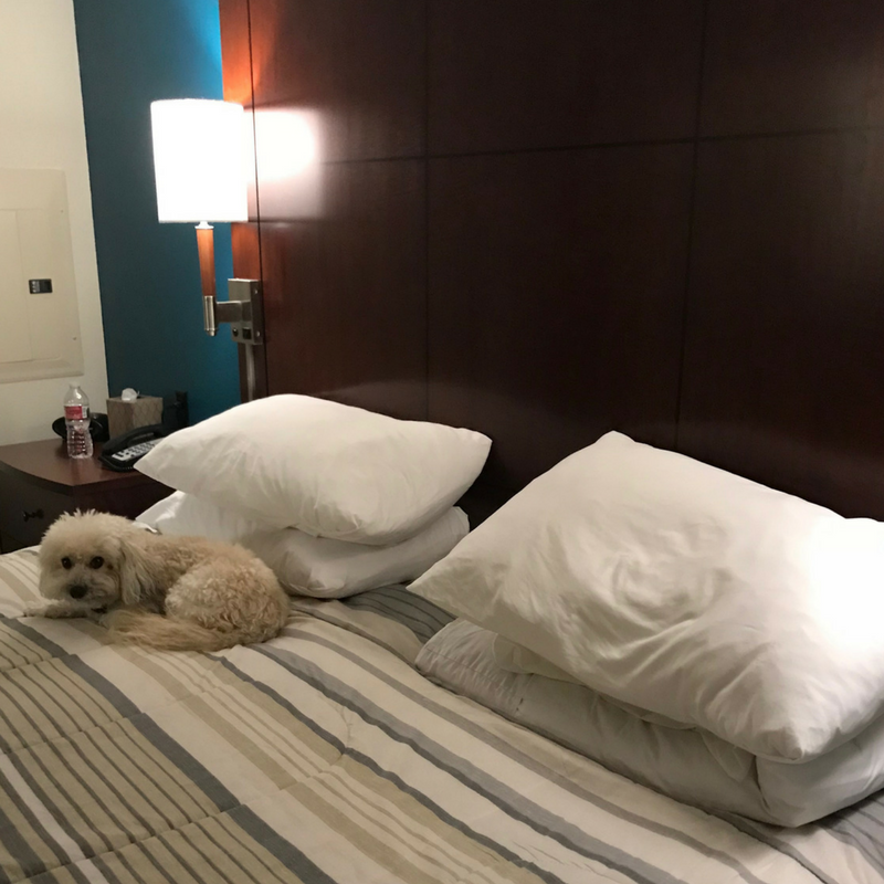 midlife, relocation, residence inn, dog friendly hotel, marriage